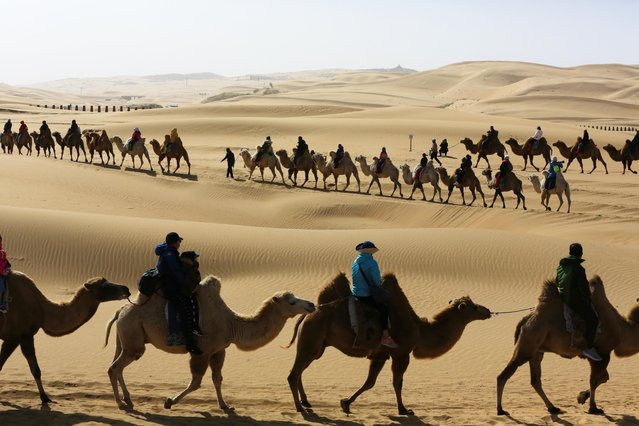 Tourists ride camels at the Whistling Dune Bay, a desert resort, on the third day of the National Day and Mid-Autumn Festival holiday on October 3, 2020 in Ordos, Inner Mongolia Autonomous Region of China. (Photo by Zhao Yongchun/VCG via Getty Images)