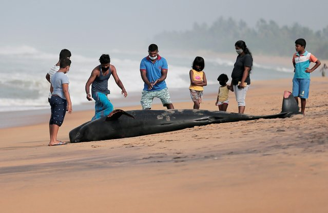 People look at a dead pilot whale stranded on a beach in Panadura, Sri Lanka, November 3, 2020. (Photo by Dinuka Liyanawatte/Reuters)