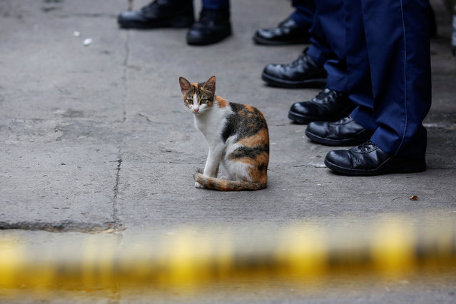 A cat sits behind a police line during investigating after two men were killed during a drugs related police operation in Manila, Philippines October 19, 2016. (Photo by Damir Sagolj/Reuters)