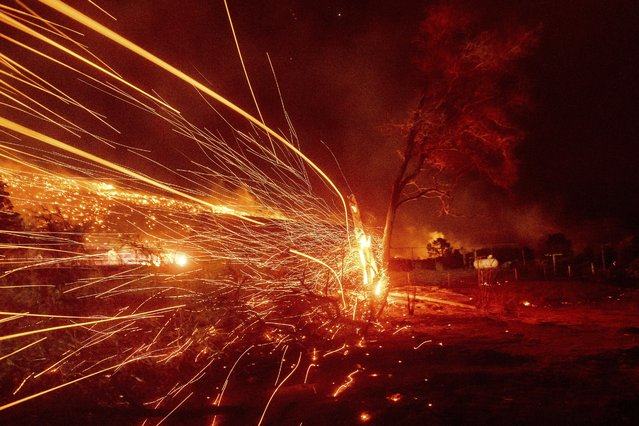 Embers fly from a tree as the Mountain View Fire burns through the Walker community in Mono County, Calif., on Tuesday, November 17, 2020. (Photo by Noah Berger/AP Photo)