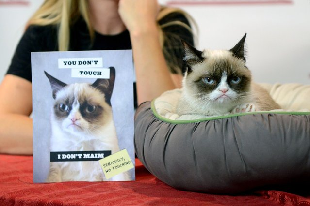 """Grumpy Cat attends the """"Grumpy Cat: A Grumpy Book"""" Book Event at Bookends Bookstore on October 16, 2013 in Ridgewood, New Jersey. (Photo by Michael N. Todaro/WireImage)"""
