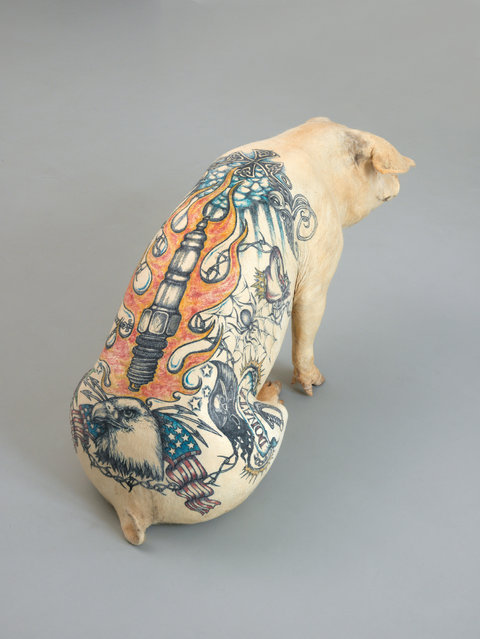 Tattooing Pigs By Wim Delvoye