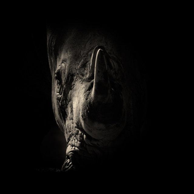 Rhino. (Photo by Alex Teuscher/BNPS)