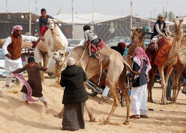 Camel breeders try to control the way of jockeys during the opening of 18th International Camel Racing festival at the Sarabium desert in Ismailia, Egypt, March 12, 2019. (Photo by Amr Abdallah Dalsh/Reuters)