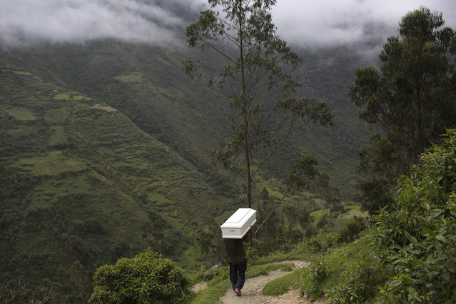 In this March 29, 2016 photo, a man shoulders a coffin with the remains of a loved one who was slain more than two decades ago by Shining Path rebels, as he walks to the cemetery for a group burial service, in Ccano, a village in the Huanta area of Ayachcuo department, Peru. Presidential candidate Keiko Fujimori's base of support is in places like Ccano, where promises to build roads, clinics and schools recall her agronomist father's own legacy of delivering aid to the long-overlooked countryside. (Photo by Rodrigo Abd/AP Photo)