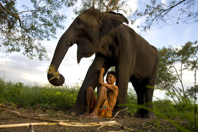 Sangworn, a mahout (elephant driver), sits with his elephant, Bussaba, 13 years old, at his temporary camp in Bangkok, Thailand