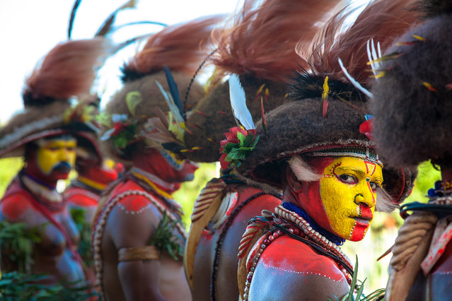 """""""Huli Wigman"""". The Huli wigmen are traditional warriors of the Tari area in the Western Highlands of Papua New Guinea. They grow their hair from early puberty and fashion it into the wig you see in this image. Each warrior has a different wig, with different adornments, it all depends on who you are in the tribe and what your accomplishments would have been. Photo location:  Port Moresby, Papua New Guinea. (Photo and caption by Vanessa Kerton/National Geographic Photo Contest)"""