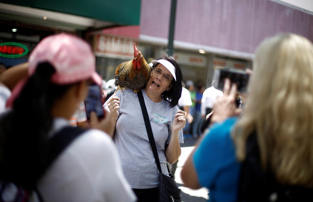 "A tourist reacts as she takes a picture with ""Paquito"", the favourite rooster of Martin Herrera, in San Jose, Costa Rica April 27, 2017. (Photo by Juan Carlos Ulate/Reuters)"