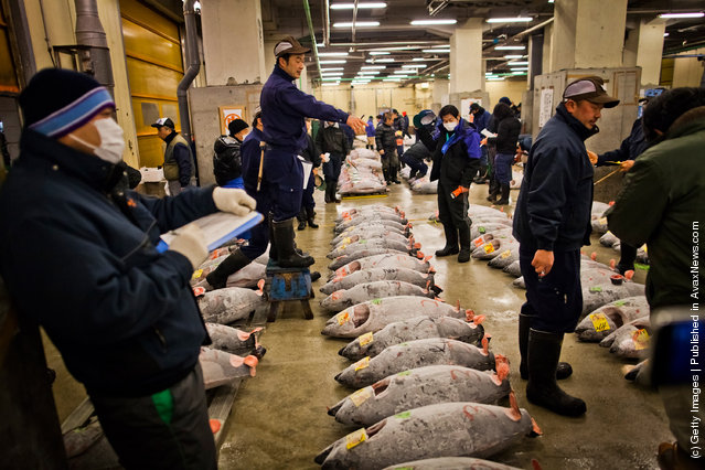An auctioneer starts the Tuna auction at the Tsukiji fish market