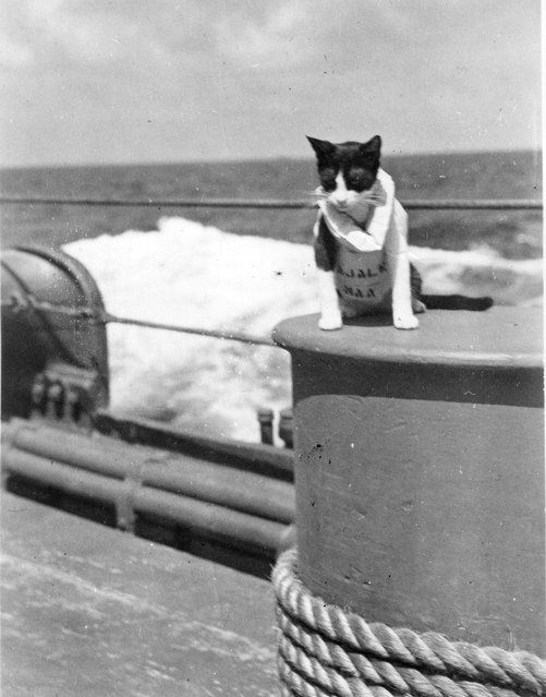 Our pal Kwajalein, who deserted is in Australia for a friendly tomcat
