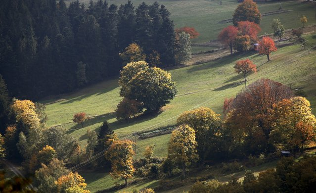 Late autumn colours marking a change in season are seen in the Vosges mountains in the Alsace region, Eastern France, October 11, 2015. (Photo by Jacky Naegelen/Reuters)