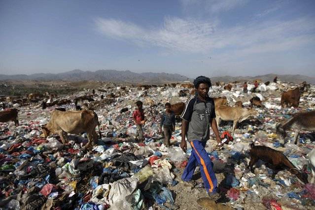 A man walks at a garbage disposal site near the southern Yemeni province of Taiz March 31, 2013. (Photo by Mohamed al-Sayaghi/Reuters)