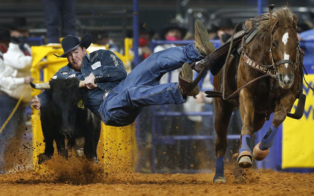 Steer wrestler Jacob Elder competes during Round 10 of the National Finals Rodeo at Globe Life Field in Arlington, Texas, Saturday, December 12, 2020. Elder won the round and the championship. (Photo by Tom Fox/The Dallas Morning News via AP Photo)