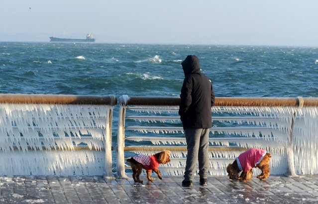 A man stops to look at a frozen handrail as he walks his dogs along the coastline, in Dalian, Liaoning province, China November 25, 2015. (Photo by Reuters/Stringer)