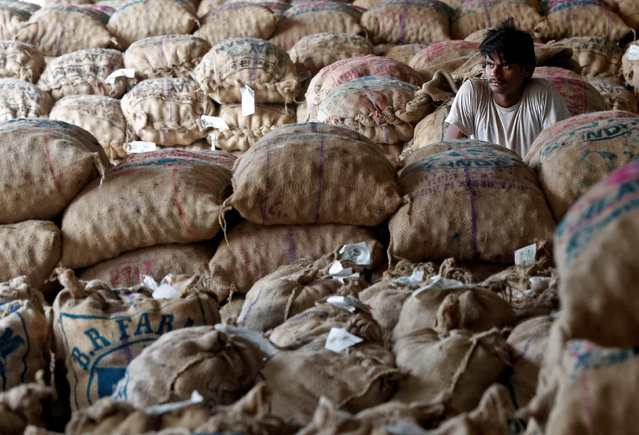 A labourer sits amongst sacks of unsold potatoes at a wholesale market in Manchar village in the western state of Maharashtra, India, November 16, 2016. (Photo by Shailesh Andrade/Reuters)