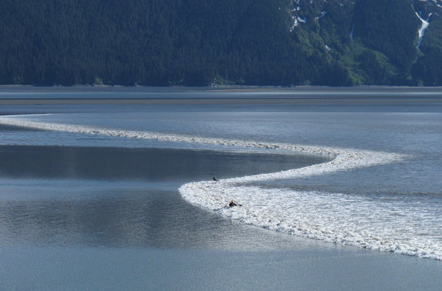 A kayaker rides the biggest bore tide of the summer as it roared into Turnagain Arm south of Anchorage, Alaska, on June 5, 2012. (Photo by Ron Barta/AP Photo via The Atlantic)