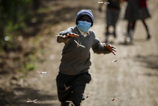 Stephen Mudoga, 12, the son of a farmer, chases locusts as he returns home from school, at Elburgon, in Nakuru county, Kenya Wednesday, March 17, 2021. It's the beginning of the planting season in Kenya, but delayed rains have brought a small amount of optimism in the fight against the locusts, which pose an unprecedented risk to agriculture-based livelihoods and food security in the already fragile Horn of Africa region, as without rainfall the swarms will not breed. (Photo by Brian Inganga/AP Photo)