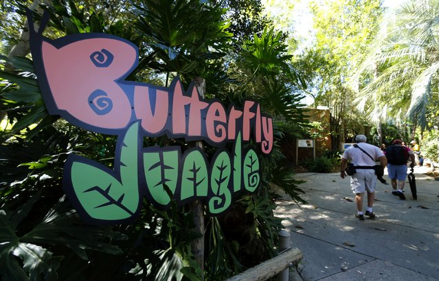 Guests make their way to view  hundreds of  butterflies from around the world inside the bird aviary at the San Diego Zoo Safari Park in San Diego, California March 13, 2015. (Photo by Mike Blake/Reuters)