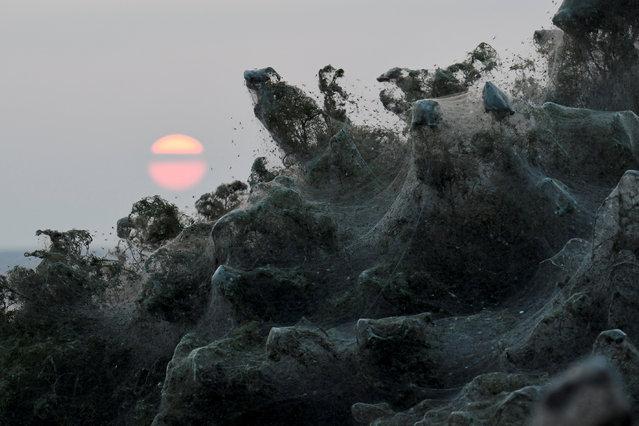The sun rises as spider webs blanket bushes at the banks of Lake Vistonida, Greece, October 19, 2018. (Photo by Alexandros Avramidis/Reuters)