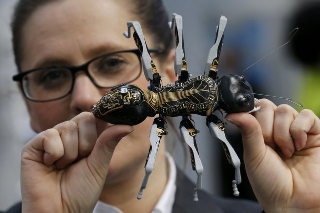 "A woman holds a BionicANT (according to manufacturer, ""ANT"" stands both for the natural role model and for Autonomous Networking Technologies) developed by German FESTO company, at the world's largest industrial technology fair, the Hannover Messe in Hanover, April 12, 2015. (Photo by Wolfgang Rattay/Reuters)"