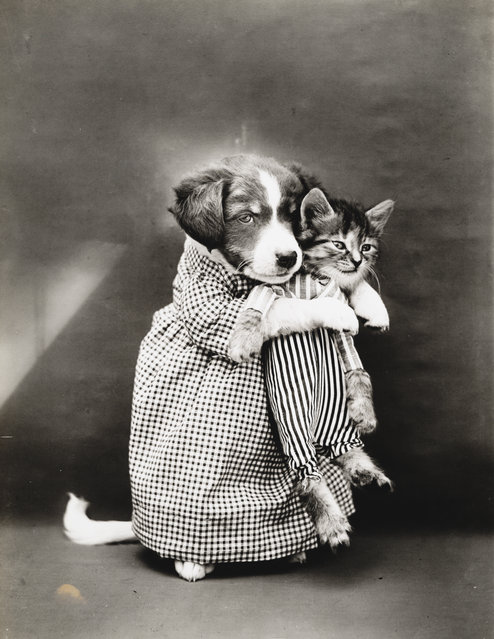 Photograph shows a puppy holding a kitten, 1914. (Photo by Harry Whittier Frees/Library of Congress)