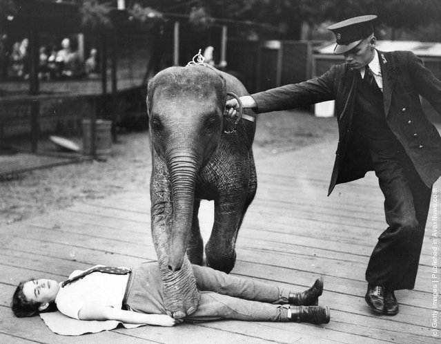 Keepers at London Zoo teaching an 18 month old baby Indian elephant to perform tricks, 1937
