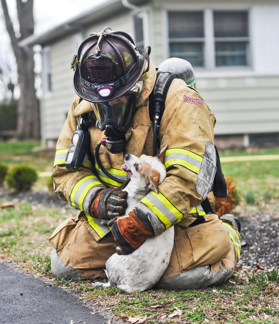Espy, Pa. firefighter Scott Dawson kneels down with Finn, a chihuahua mix, after pulling him out of a house fire in Bloomsburg, Pa., Friday, March 18, 2016. The dog was one of three saved from the burning home. (Photo by Mary Bove/Bloomsburg Press Enterprise via AP Photo)