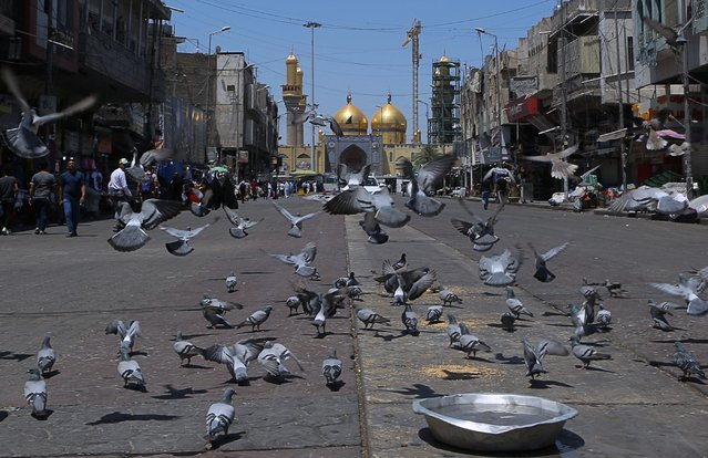 In this Wednesday, May 21, 2019, photo, pigeons fly outside the golden-domed shrine of Imam Moussa al-Kadhim in Kadhimiya district in north Baghdad, Iraq. (Photo by Khalid Mohammed/AP Photo)