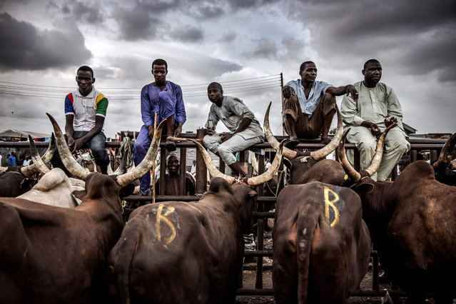 A group of herdsmen selling cows wait for costumers at Kara Cattle Market in Lagos, Nigeria, on April 10, 2019. Kara cattle market in Agege, Lagos is one of the largest of West Africa receiving thousands of cows weekly due to the massive consumption of meat in Lagos area. (Photo by Luis Tato/AFP Photo)