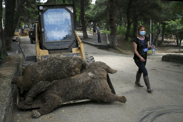 A zoo keeper walks past dead bears at the zoo in Tbilisi, Georgia, June 17, 2015. Tigers, lions, bears and wolves were among more than 30 animals that escaped from a Georgian zoo and onto the streets of the capital Tbilisi on Sunday during floods that killed at least 12 people. REUTERS/David Mdzinarishvili