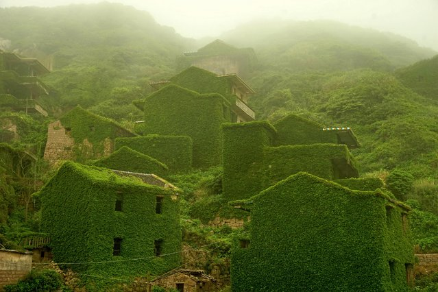 Houses are covered with creepers at a deserted village on Shengshan Island on May 31, 2015 in Zhoushan, China. (Photo by VCG/VCG via Getty Images)