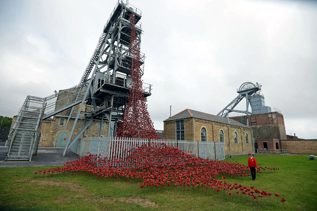 "Neve Stuart, 9, of Ashington views the ""Weeping Window"" part of the sculpture of poppies from the Tower of London on display at Woodhorn Museum on September 11, 2015 in Ashington, Northumberland. The poppies are on a UK tour and can be seen at two other locations at the Yorkshire Sculpture Park and St George's Hall in Liverpool as well as this once until November 1, 2015. (Photo by Nigel Roddis/Getty Images)"