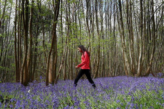 Isla Stanton pauses to view the bluebells in King's Wood near Ashford, Kent on May 1, 2020, during her daily exercise as the UK continues in lockdown to help curb the spread of the coronavirus. (Photo by Gareth Fuller/PA Images via Getty Images)