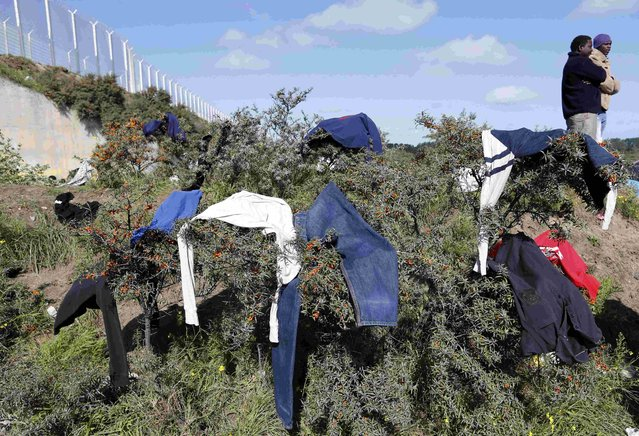 "Migrants stand near clothes drying in bushes at the makeshift camp called ""The New Jungle"" in Calais, France, September 19, 2015. (Photo by Regis Duvignau/Reuters)"