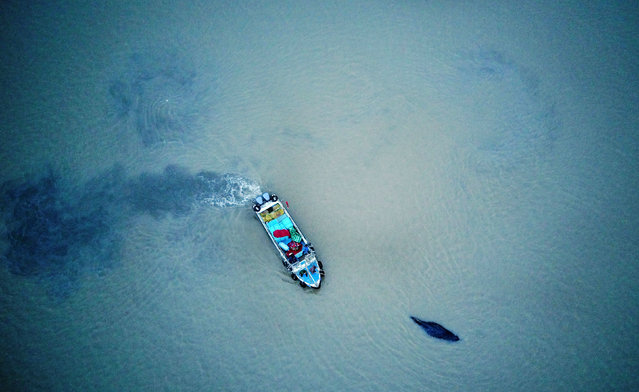 This photo taken on November 13, 2017 shows a boat escorting a stranded humpback whale back to deeper waters in Qidong in China's eastern Jiangsu province. (Photo by AFP Photo/Stringer)