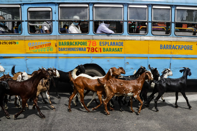 A herd of goats walk past a parked bus as passengers sit wearing masks as a precaution against the coronavirus in Kolkata, India, Monday, August 10, 2020. (Photo by Bikas Das/AP Photo)