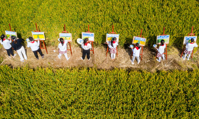 Pupils paint a picture of a rural harvest scene beside a golden rice field in Hai 'an city, Jiangsu Province, China, October 11, 2020. (Photo by Costfoto/Barcroft Media via Getty Images)