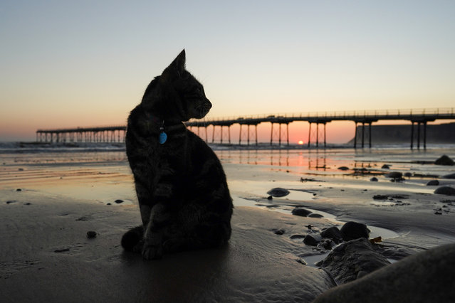 A cat sits on the beach at sunrise on September 01, 2020 in Saltburn By The Sea, England. Today will be largely fine and dry for most today with sunny spells and gentle winds. (Photo by Ian Forsyth/Getty Images)