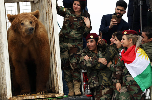 Female Iraqi Kurdish peshmerga fighters watch on as they release a bear into the wild in the Gara Mountains near the northern Iraqi city of Dohuk on March 4, 2018, after Iraqi Kurdish Animal rights activists from a local NGO rescued it from a private home. (Photo by Safin Hamed/AFP Photo)