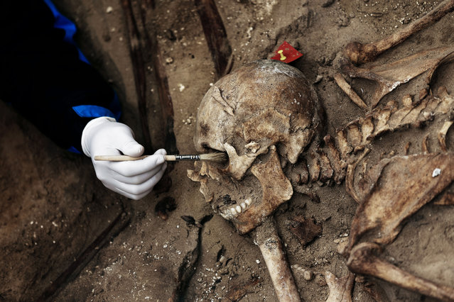 In this photo taken on December 16, 2014, a volunteer uses a brush to clean the skull of a victim before his exhumation inside a mass grave at the cemetery of Puerto Real, Spain. (Photo by Daniel Ochoa de Olza/AP Photo)