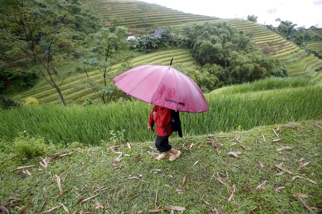 A pupil of the Dao ethnic tribe returns home from school along a hillside path at Suoi Thau village in Hoang Su Phi district of Vietnam's northern province of Ha Giang, located at the border with China, September 18, 2015. (Photo by Reuters/Kham)