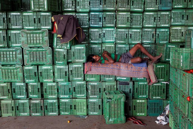 A labourer sleeps on baskets of unsold tomatoes at a wholesale market in Manchar village in the western state of Maharashtra, India, November 16, 2016. (Photo by Shailesh Andrade/Reuters)