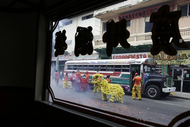 Dancers perform a Lion Dance as a local bus known as Diablo Rojo passes by in Chinatown during Chinese Lunar New Year celebrations at Chinatown in Panama City February 19, 2015. (Photo by Carlos Jasso/Reuters)