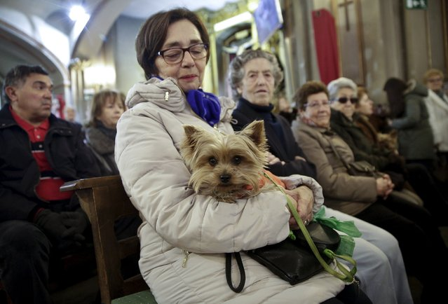 A woman holds her dog during a mass inside San Anton Church in Madrid, Spain, January 17, 2016. (Photo by Andrea Comas/Reuters)