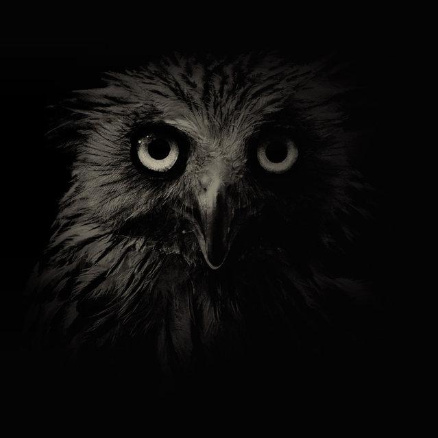 Owl. (Photo by Alex Teuscher/BNPS)