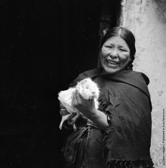 A Peruvian woman holding a large guinea pig - not a pet, but a sought-after delicacy, 1955