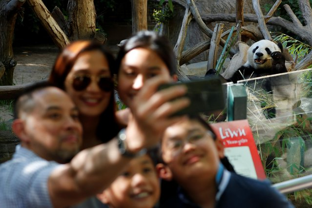 A family take a souvenir picture next to giant male panda Xiao Liwu, who was born at the San Diego Zoo and will be repatriated to China with his mother Bai Yun, bringing an end to a 23-year-long panda research program in San Diego, California, U.S., April 18, 2019. (Photo by Mike Blake/Reuters)