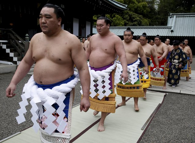 """Sumo wrestlers line up to leave after praying before the start of the annual """"Honozumo"""" ceremonial sumo tournament dedicated to the Yasukuni Shrine in Tokyo, Japan, April 18, 2016. (Photo by Yuya Shino/Reuters)"""