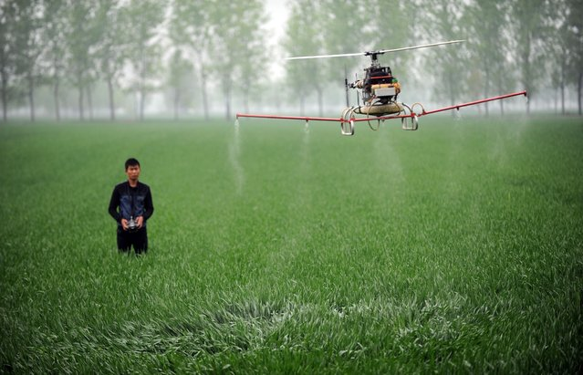 This picture taken on April 15, 2014 shows a man controlling a drone to spray pesticides on a farm in Bozhou, central China's Anhui province. China's economy expanded 7.4 percent year-on-year in the first three months of the year, the government said Wednesday, marking a further slowing in the world's second-largest economy. (Photo by AFP Photo/STR)