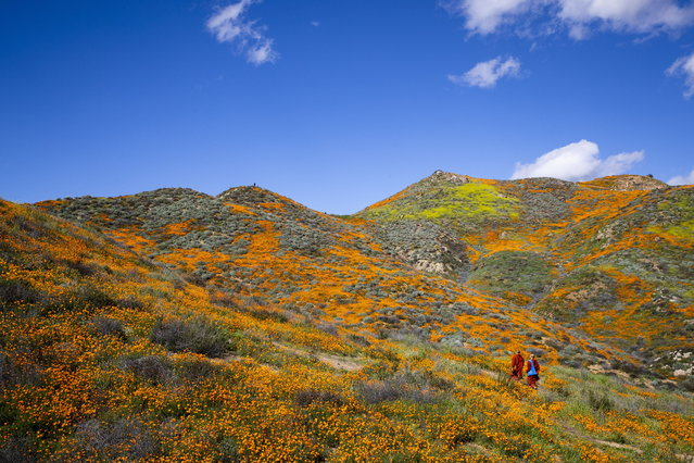 Two buddhist monks walk among the poppy fields as they are blooming on the slops of Walker Canyon near Lake Elsinore, California, USA, 08 March 2019. The heavy rains in California have boosted the growth of wild desert flowers, an occurrence called super bloom. (Photo by Etienne Laurent/EPA/EFE)